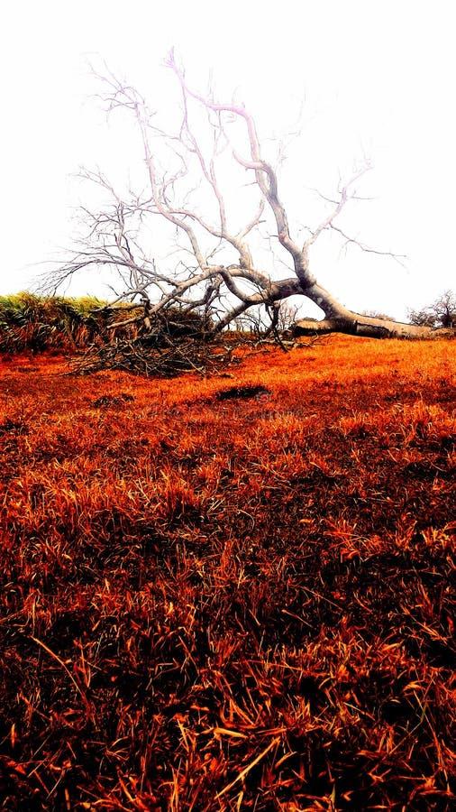 Πορτοκάλι δέντρων πτώσης στοκ εικόνες με δικαίωμα ελεύθερης χρήσης