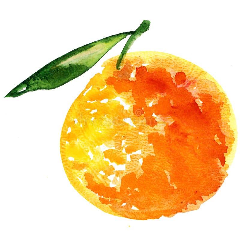 πορτοκάλι καρπού διανυσματική απεικόνιση