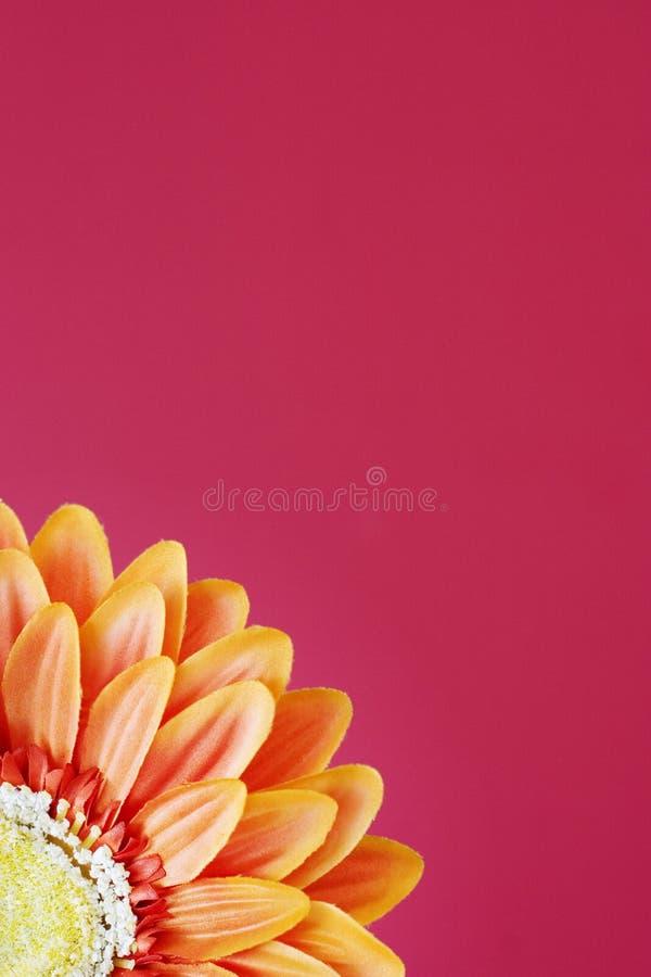 πορτοκάλι 2 λουλουδιών στοκ φωτογραφίες