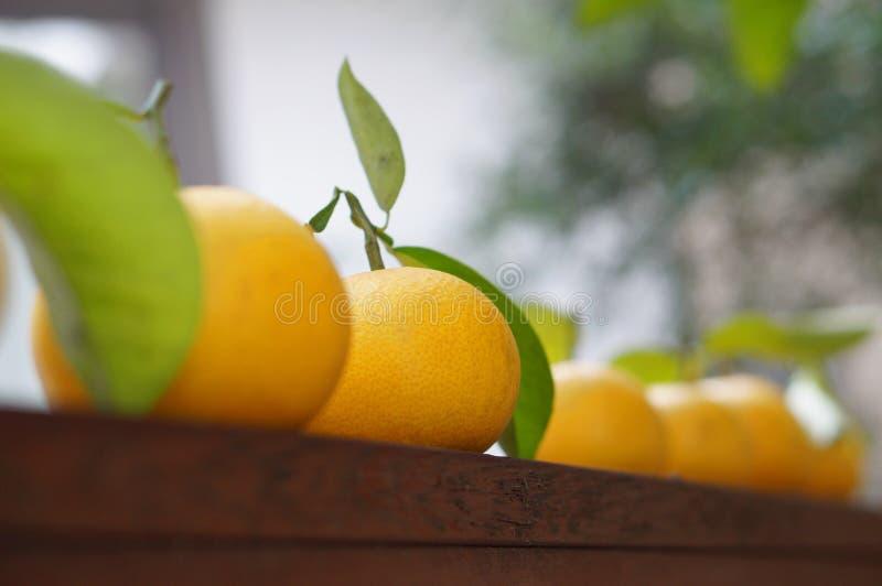 Πορτοκάλια που παρατάσσονται στοκ εικόνα