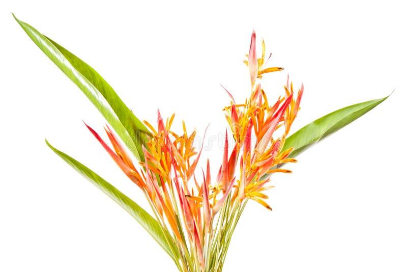 πορτοκάλι λουλουδιών &tau στοκ εικόνα