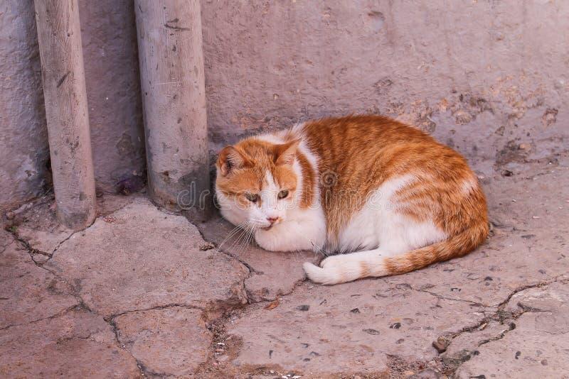 Πορτοκαλής-άσπρη γάτα στην οδό στοκ εικόνα