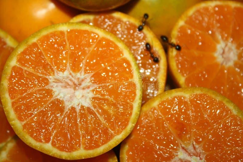 Πορτοκαλής φρέσκος δροσερός στοκ εικόνες