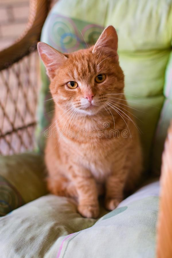 Πορτοκαλί γάτα στοκ φωτογραφία με δικαίωμα ελεύθερης χρήσης