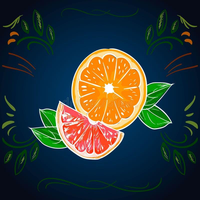 Πορτοκαλί διανυσματικό σχέδιο Καλλιτεχνική απεικόνιση θερινών φρούτων Απομονωμένες συρμένες χέρι ολόκληρες λεμόνι και φέτα Χορτοφ απεικόνιση αποθεμάτων