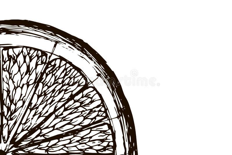 πορτοκαλί λευκό φετών ανασκόπησης Hand-drawn, doodle, διάνυσμα, zentangle, φυλετικό στοιχείο σχεδίου μαύρο λευκό ελεύθερη απεικόνιση δικαιώματος