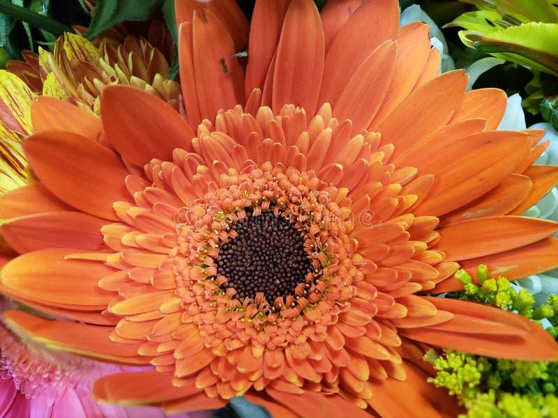 πορτοκαλί λουλούδι gerbera σε μια floral ανθοδέσμη, ένα υπόβαθρο και μια σύσταση στοκ φωτογραφίες