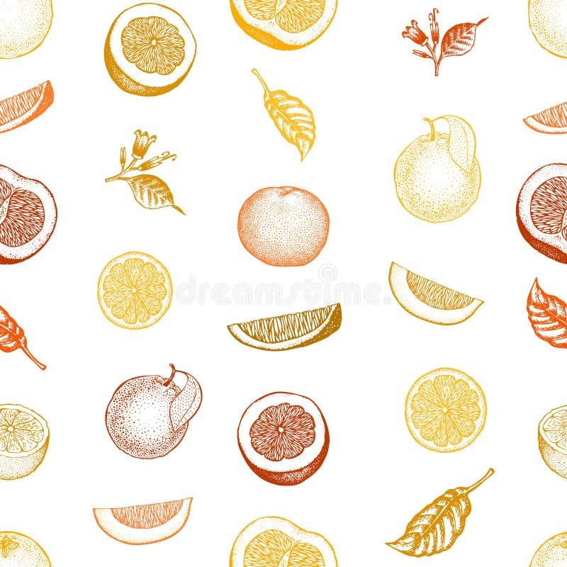 πορτοκαλί πρότυπο άνευ ρα Συρμένο χέρι διανυσματικό υπόβαθρο φρούτων Χαραγμένο ύφος Εκλεκτής ποιότητας απεικόνιση εσπεριδοειδών ελεύθερη απεικόνιση δικαιώματος