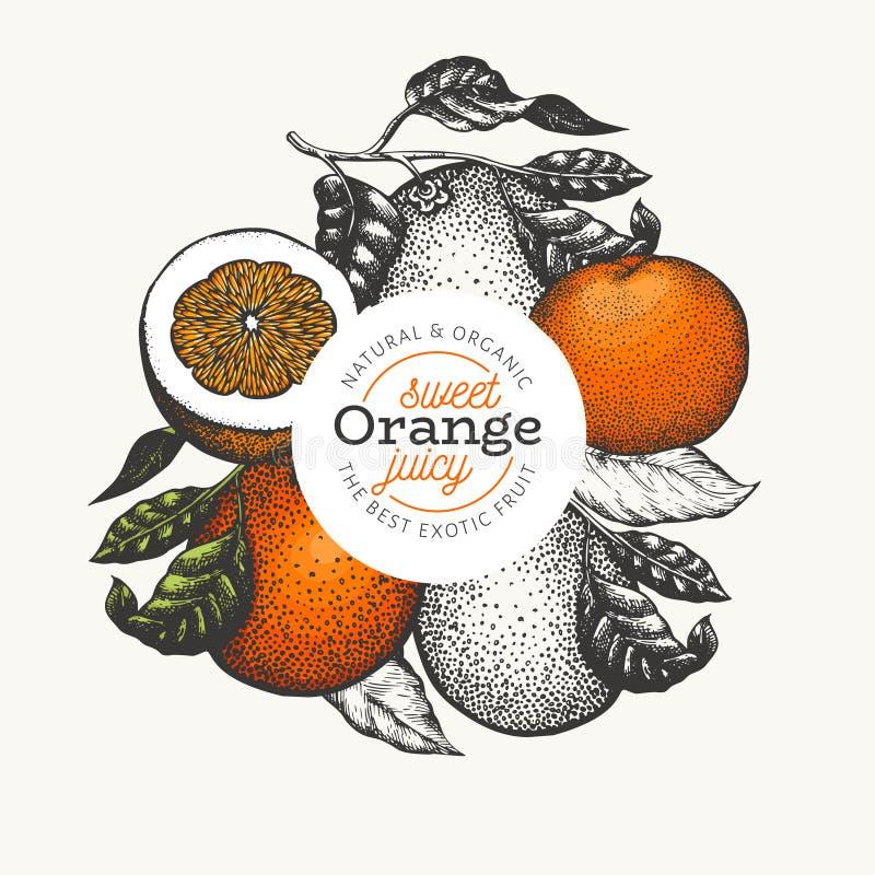 Πορτοκαλί πρότυπο σχεδίου φρούτων Συρμένη χέρι διανυσματική απεικόνιση φρούτων Χαραγμένο υπόβαθρο εσπεριδοειδών ύφους εκλεκτής πο διανυσματική απεικόνιση
