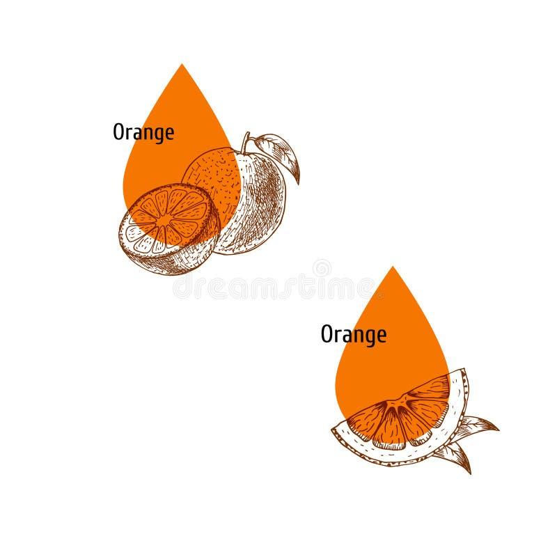 Πορτοκαλί σύνολο εικονιδίων πετρελαίου φλούδας Συρμένο χέρι σκίτσο Εκχύλισμα των εγκαταστάσεων r απεικόνιση αποθεμάτων