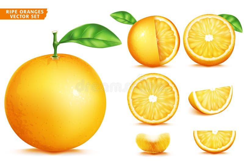 Πορτοκαλί σύνολο τροφίμων φρούτων ώριμο ρεαλιστικό τρισδιάστατο διανυσματικό Ολόκληρη μισή και τεμαχισμένη έκδοση απεικόνιση αποθεμάτων