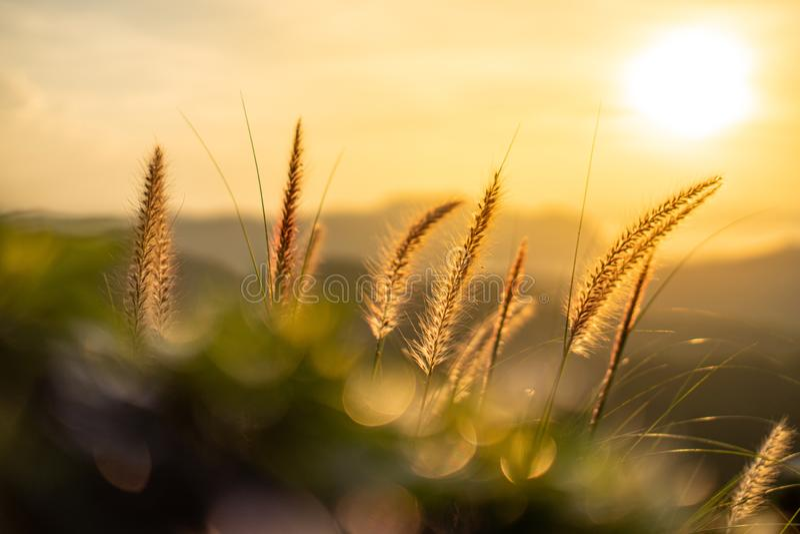 Πορτοκαλί φως από τον ήλιο που λάμπει μέσα από τις ίνες των λουλουδιών Το προσκήνιο έχει ένα σωρό πράσινα φύλλα στοκ εικόνες