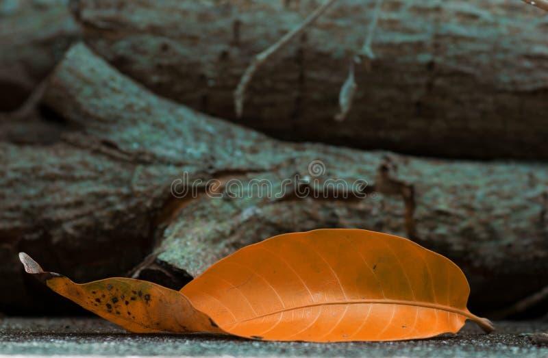 Πορτοκαλί φύλλο που τοποθετείται μπροστά από τα ξύλινα κούτσουρα στοκ εικόνα με δικαίωμα ελεύθερης χρήσης