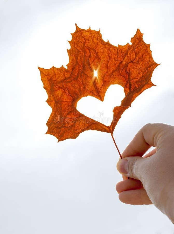 Πορτοκαλί φύλλο σφενδάμου με τη αποκόπτω? καρδιά στη θηλυκή κινηματογράφηση σε πρώτο πλάνο χεριών, έννοια φθινοπώρου στοκ εικόνες με δικαίωμα ελεύθερης χρήσης