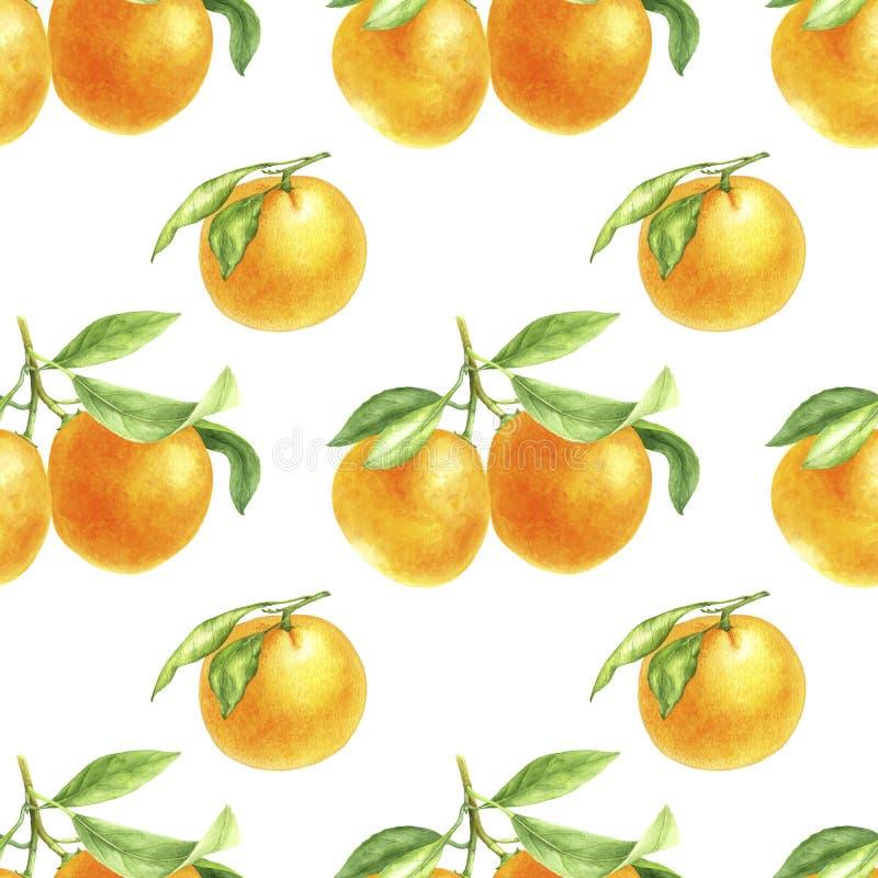 Πορτοκαλί tangerine σχέδιο στο watercolor διανυσματική απεικόνιση