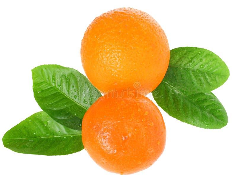 πορτοκαλί tangerine στοκ φωτογραφία με δικαίωμα ελεύθερης χρήσης
