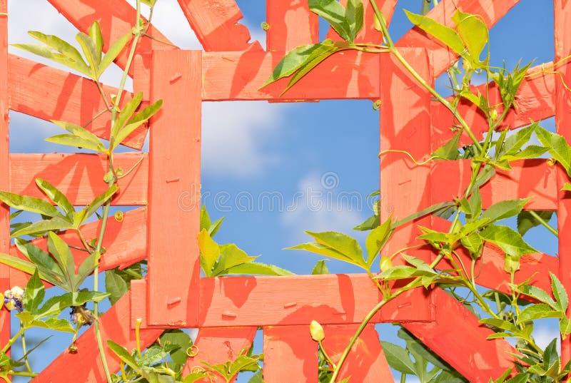Πορτοκαλί trellis με μια τετραγωνική τρύπα, αμπελοκαλλιέργεια πάθους γύρω από το στοκ εικόνα