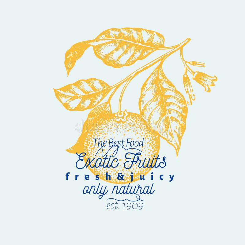 Πορτοκαλιά απεικόνιση κλάδων Συρμένη χέρι διανυσματική απεικόνιση φρούτων Χαραγμένο ύφος Εκλεκτής ποιότητας απεικόνιση εσπεριδοει απεικόνιση αποθεμάτων
