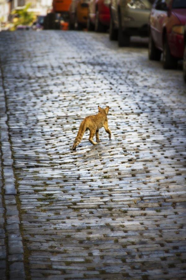 Πορτοκαλιά γάτα σε μια οδό κυβόλινθων στοκ φωτογραφίες με δικαίωμα ελεύθερης χρήσης