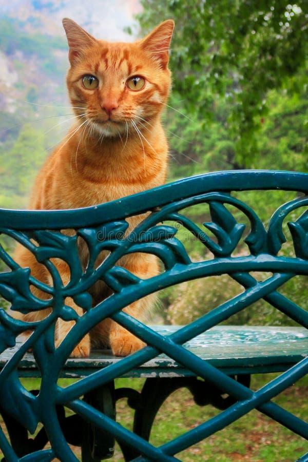 Πορτοκαλιά γάτα στον πίνακα στοκ εικόνες