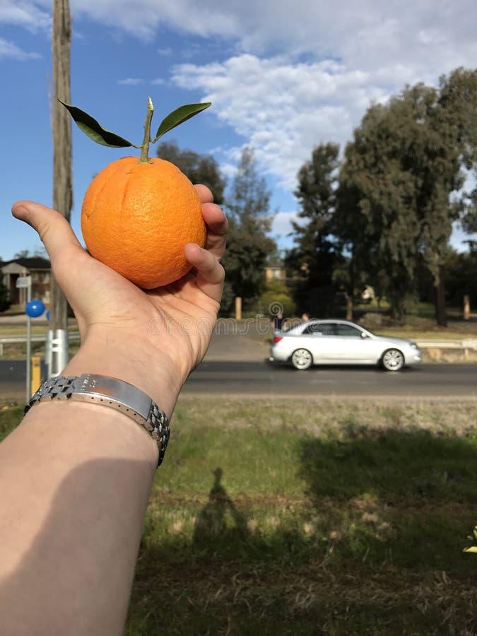 Πορτοκαλιά δέντρα Griffith στοκ εικόνα