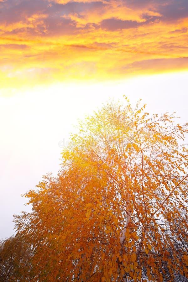 Πορτοκαλιά και κίτρινα φύλλα στα τέλη της πτώσης ή τον πρώιμο χειμώνα κάτω από στοκ εικόνες