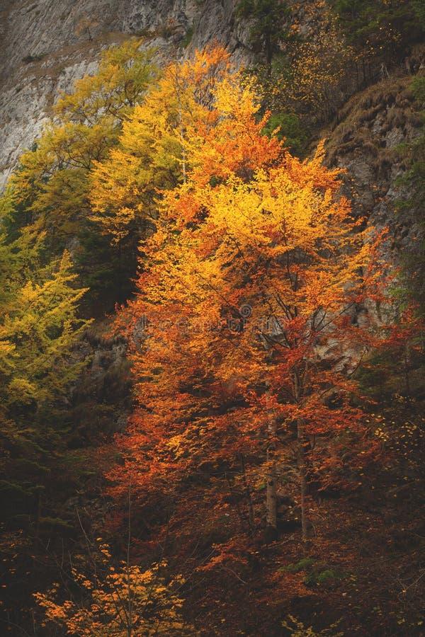 Πορτοκαλιά λεπτομέρεια δέντρων φύλλων κατά τη διάρκεια του φθινοπώρου στοκ εικόνες