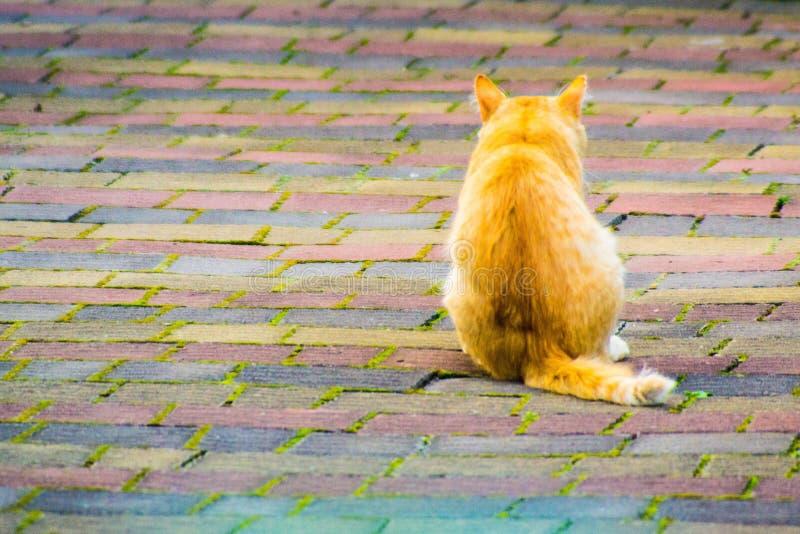 Πορτοκαλιά μόνη γάτα στο πεζοδρόμιο στοκ φωτογραφία με δικαίωμα ελεύθερης χρήσης
