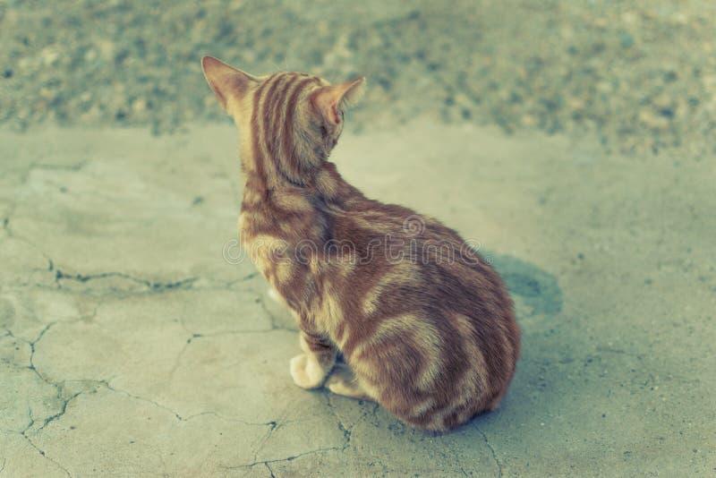Πορτοκαλιά ριγωτή γάτα στοκ εικόνα