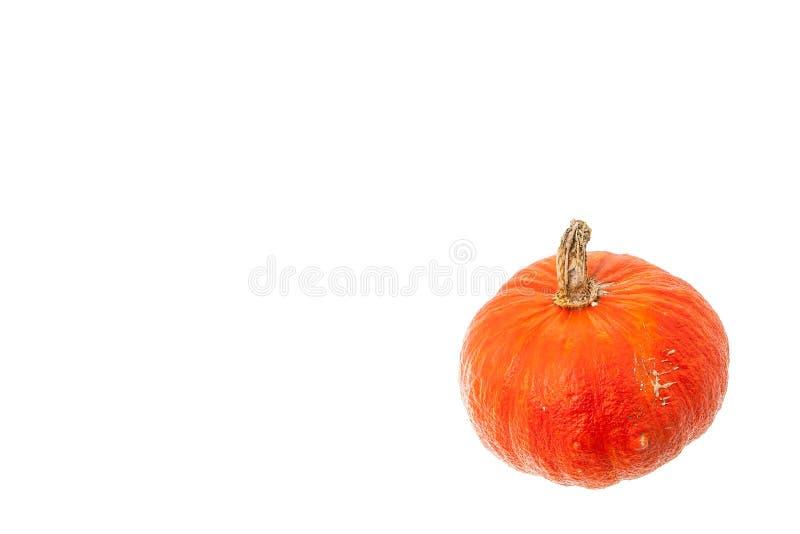 Πορτοκαλιά συγκομιδή κολοκύθας που απομονώνεται στο άσπρο υπόβαθρο στοκ εικόνα