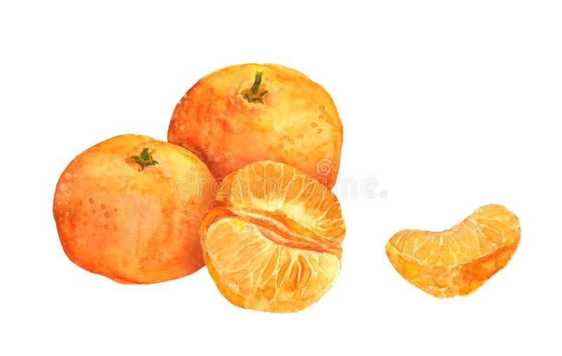 Πορτοκαλιά φρούτα κινεζικής γλώσσας watercolor διανυσματική απεικόνιση