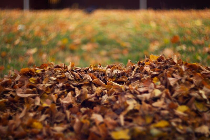 Πορτοκαλιά φύλλα στην υγρή χλόη στοκ φωτογραφίες