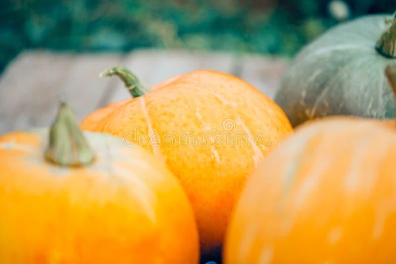 Πορτοκαλιές κολοκύθες, συγκομιδή φθινοπώρου, στοκ εικόνα με δικαίωμα ελεύθερης χρήσης