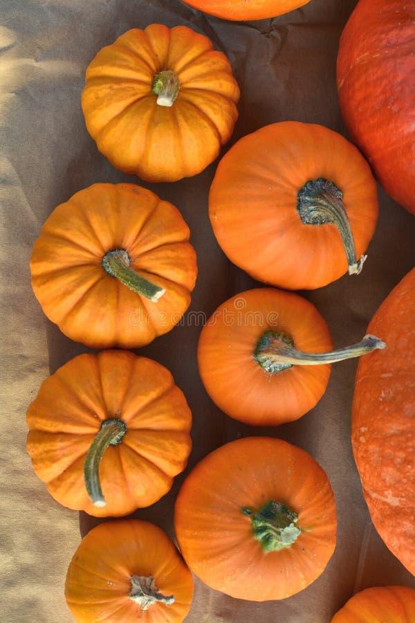 Πορτοκαλιές κολοκύθες φθινοπώρου στοκ εικόνα