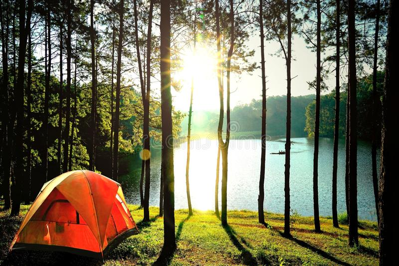 Πορτοκαλιές σκηνές στρατοπέδευσης στο δάσος δέντρων πεύκων από τη λίμνη στην πόνο Oun στοκ εικόνες
