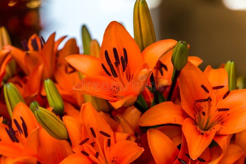 Πορτοκαλιοί κρίνοι στην αγορά στοκ φωτογραφίες με δικαίωμα ελεύθερης χρήσης