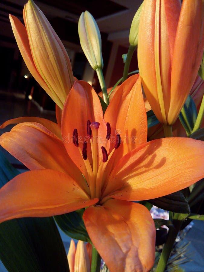 Πορτοκαλής κρίνος στοκ εικόνες με δικαίωμα ελεύθερης χρήσης