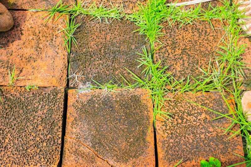 Πορτοκαλής φραγμός τούβλου Grunge με την αύξηση χλόης μεταξύ διασπασμένος του bri στοκ φωτογραφίες με δικαίωμα ελεύθερης χρήσης