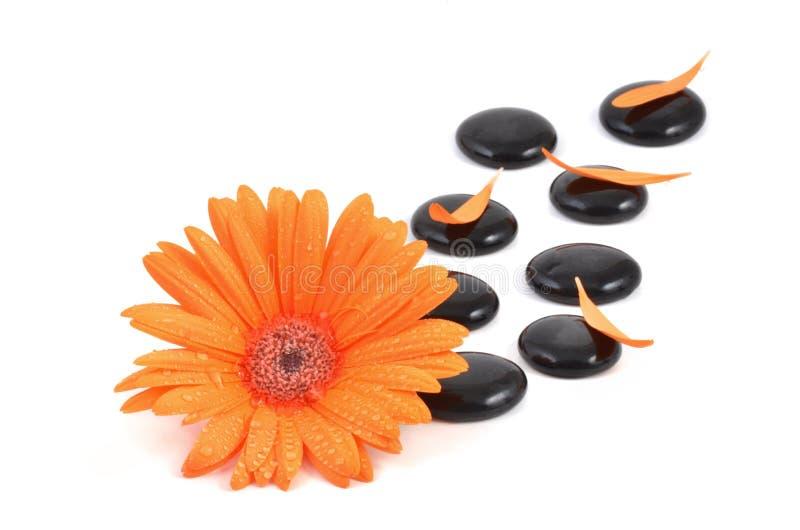 Πορτοκαλί λουλούδι gerbera και μαύρη πέτρα zen στοκ εικόνες