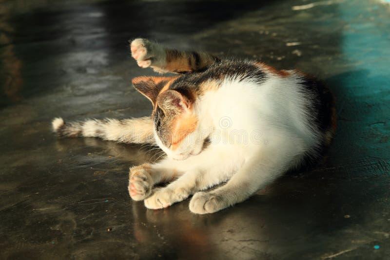 Πορτοκαλιά, γραπτή γάτα στοκ φωτογραφία με δικαίωμα ελεύθερης χρήσης