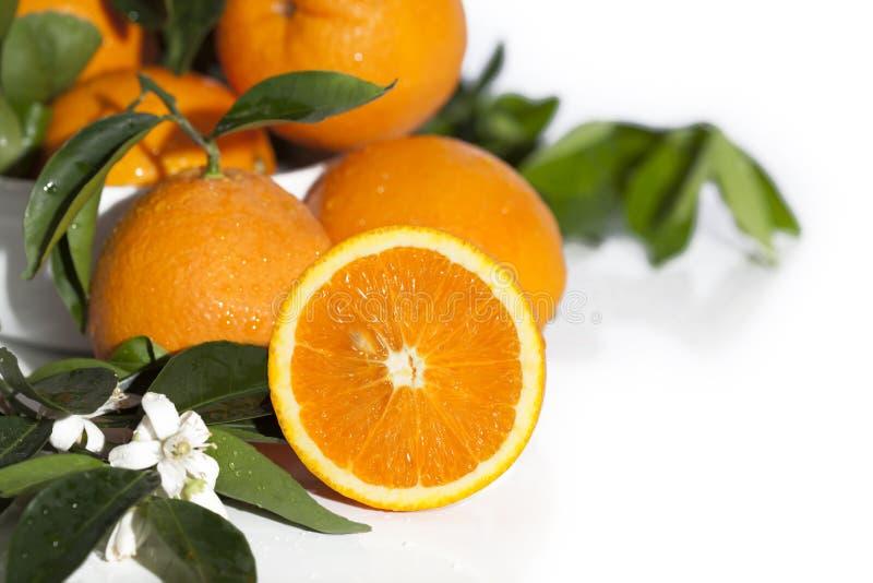 Πορτοκαλιά μισά πορτοκαλιά άνθη στοκ φωτογραφία