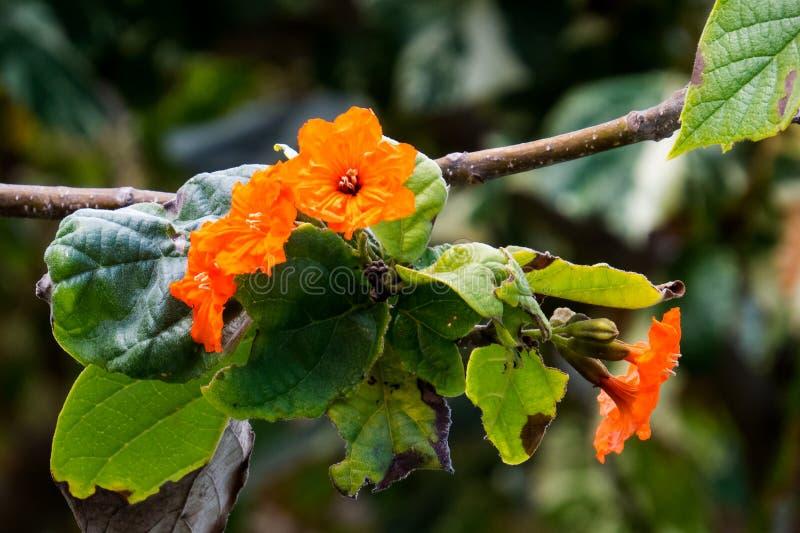 Πορτοκαλιά λουλούδια σε ένα τροπικό δέντρο στοκ εικόνες με δικαίωμα ελεύθερης χρήσης