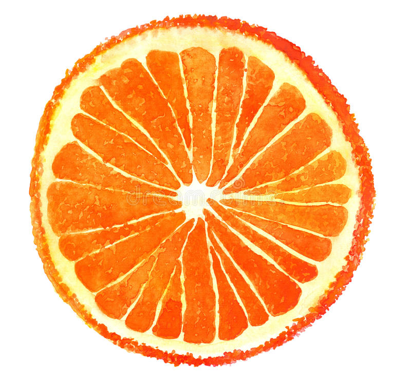 Πορτοκαλιά περικοπή Watercolor στοκ φωτογραφία με δικαίωμα ελεύθερης χρήσης