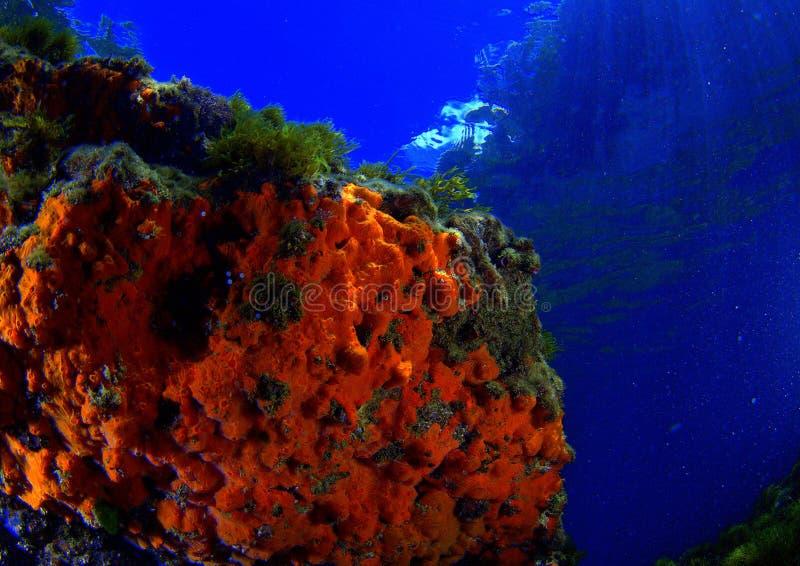 πορτοκαλιά σφουγγάρια στοκ φωτογραφία με δικαίωμα ελεύθερης χρήσης