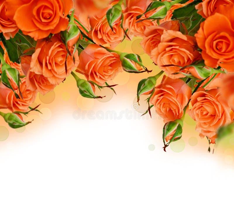 Πορτοκαλιά τριαντάφυλλα απεικόνιση αποθεμάτων