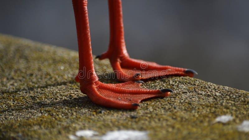 Πορτοκαλιά χυτή πόδια σκιά στοκ φωτογραφίες