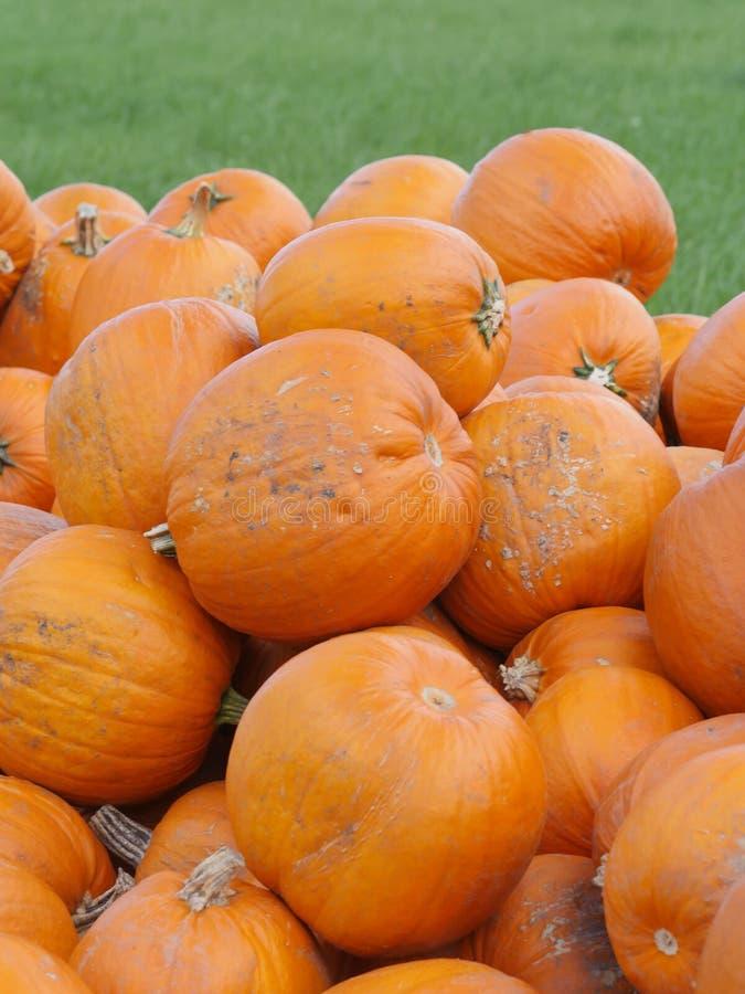 Πορτοκαλιές κολοκύθες Helloween υπαίθρια στοκ φωτογραφίες με δικαίωμα ελεύθερης χρήσης