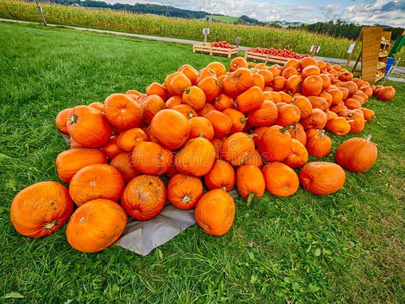 Πορτοκαλιές κολοκύθες Helloween υπαίθρια στοκ εικόνες
