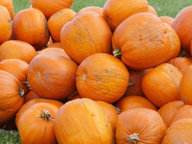 Πορτοκαλιές κολοκύθες Helloween υπαίθρια στοκ εικόνα