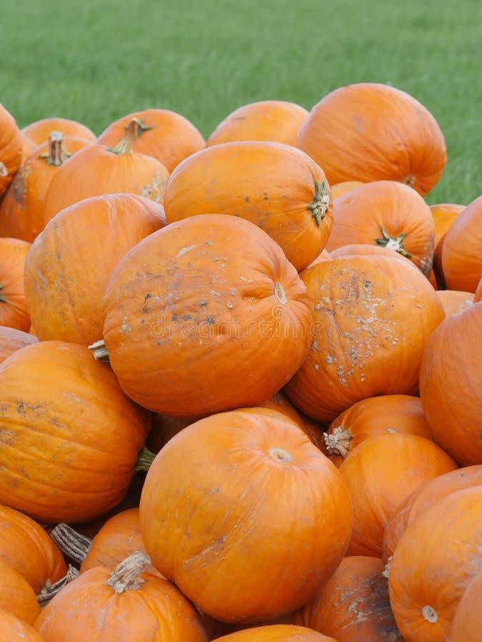 Πορτοκαλιές κολοκύθες Helloween υπαίθρια στοκ φωτογραφία με δικαίωμα ελεύθερης χρήσης